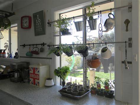 cluttered kitchen windowsill herbs indoors garden