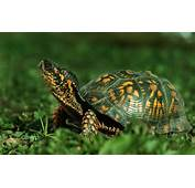 Tortoise Animal Wide HD Wallpaper  Wallpapers Rocks