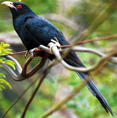 Birds Of Bangladesh Essay by Birds Words Englishfor2day