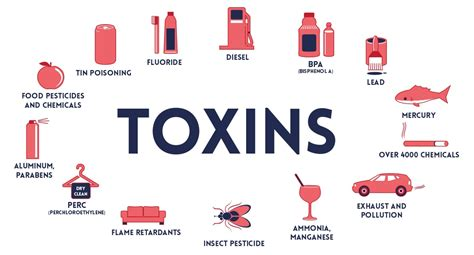 How To Detox From Environmental Toxins by This Is Why You Are Not Losing Weight Even When You Re