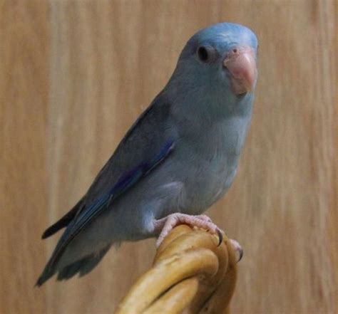 birds for sale in florida picture and images