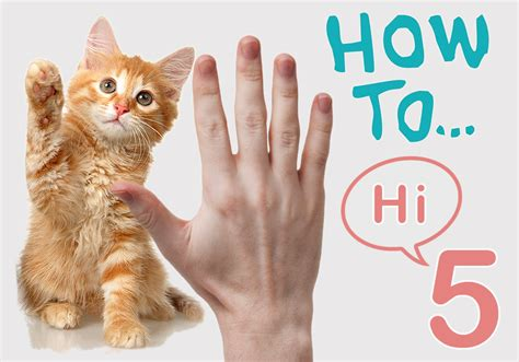 how to your to do cool tricks a cool trick to teach your cats how to high five bestvetcare