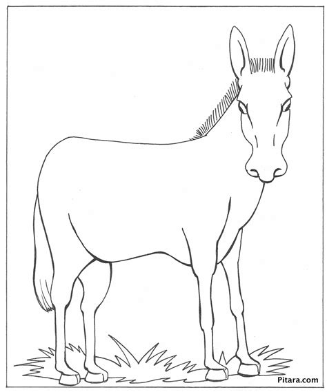 coloring pages of animals that look real domestic animals coloring pages coloring pages of