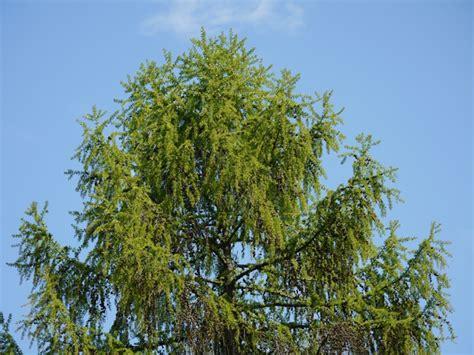 Baum Des Jahres 2012 5368 by Natur Des Jahres