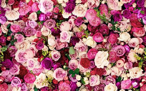 flower wallpaper for macbook kate spade everything is coming up roses know how to