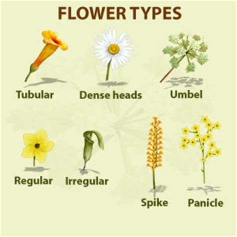7 Types Of Flowers To For A Winter Wedding by Flowers General Information