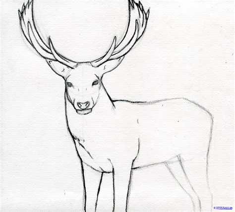 how draw a step 10 how to draw a stag deer stag