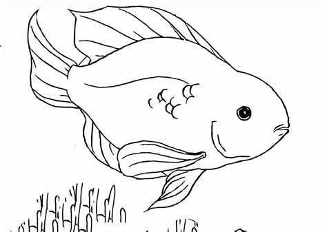 coloring pages of parrot fish coloring pages tropical fish coloring home