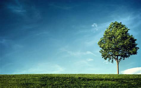 Landscape Environment Definition Tree Wallpaper Hd Wallpaper