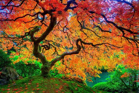 beautiful fall 4k hd desktop maple leaf tree japanese autumn season hd