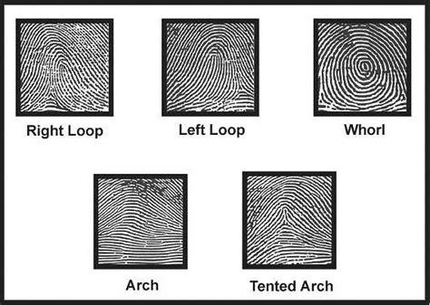 finger pattern meaning fingerprints taylor made science