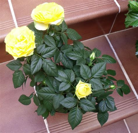 plantas patio interior oscuro ayuda y plantas para mi caluroso patio interior en c 225 diz