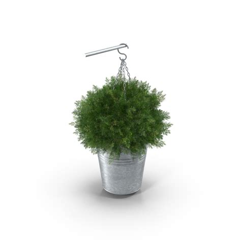 small hanging plants small hanging plant png images psds for