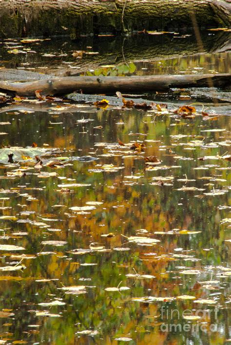 color reflections fall color reflections photograph by optical playground by