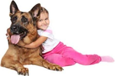 dm in dogs dm in dogs degenerative myelopathy in dogs why sanus biotex