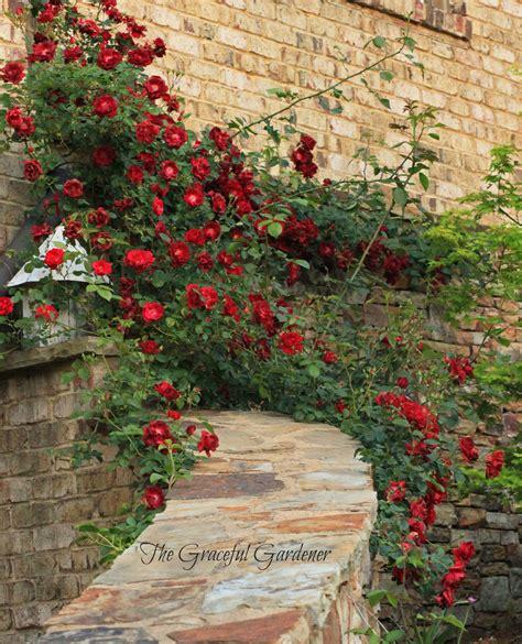 garden rose trellis plan gift ideas for her pinterest the graceful gardener 187 2013 187 may