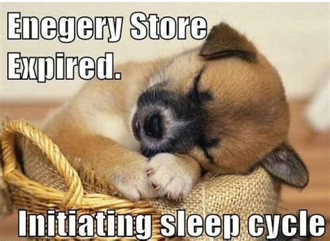 Goodnight Meme Cute - sleepy time animals funny cute beautiful pinterest
