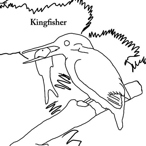 kingfisher coloring pages free coloring pages of kingfisher bird