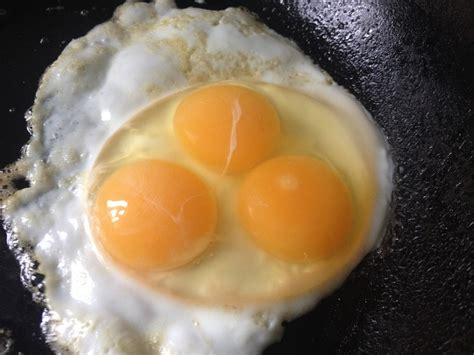 Yolk Egg yolked eggs