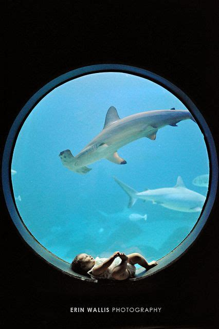 baby shark zoo 17 best images about baby photo inspiration on pinterest