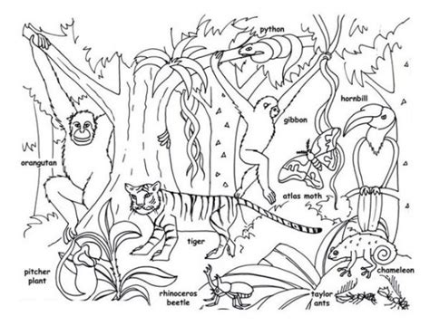 new creations coloring book series winter books rainforest animals for printable rainforest animal