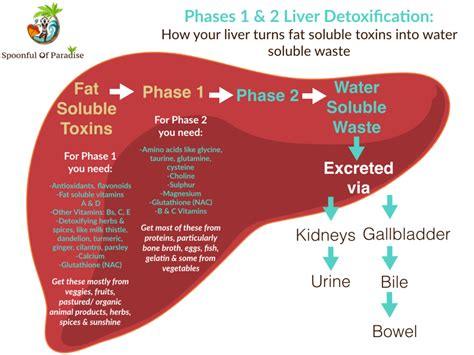 Do I Need A Liver Detox by Cleansing Part 2 It S Time To Come Clean Inspire Your