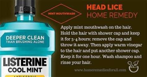 lice home remedies defenderauto info