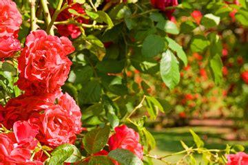 The Tradesmen Gardener garden tips for summer tradesmen ie blogtradesmen ie