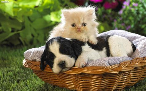 wallpaper cat and dog hd cats and dogs wallpapers wallpaper cave