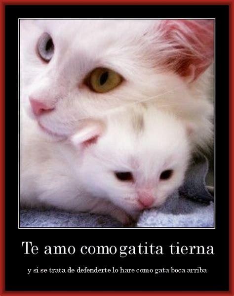 imagenes tiernas de amor con animales descarga bellas imagenes tiernas con mensajes de amor