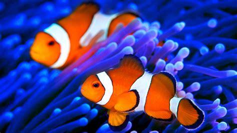 stunning aquarium   relax   hours sleep