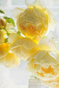 elegant sophisticated muted punch colors rose butter peonies 101 peony root and peony