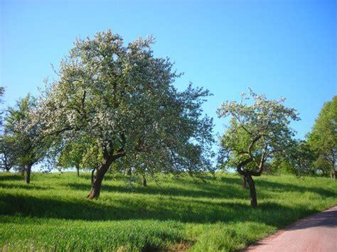 arbustos pequenos