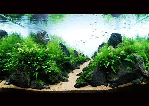 Driftwood Aquascape by Modern Aquarium Design With Aquascape Style For New