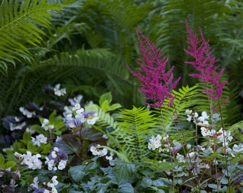 Plants That Grow Well With Astilbe Ideas For Astilbe