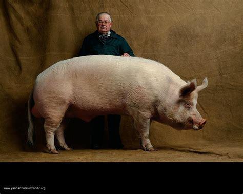 yann arthus bertrand and farm animal portraits