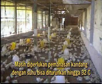 Viterna Untuk Budidaya Ayam Pedaging 500 Cc teknis budidaya ayam broiler viterna plus