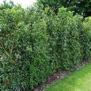 tipi di recinzione da giardino siepi da recinzione siepi