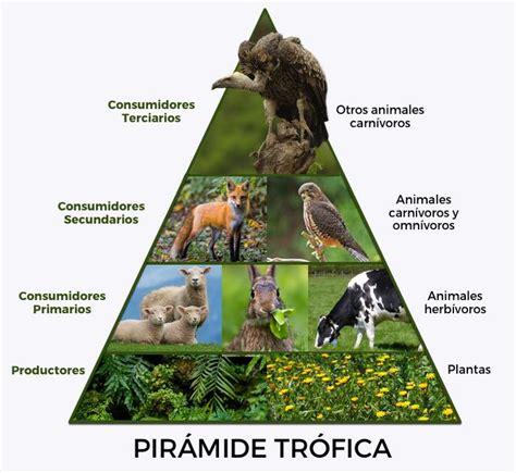 cadenas troficas en ecosistemas 191 qu 233 es la cadena alimenticia o cadena tr 243 fica