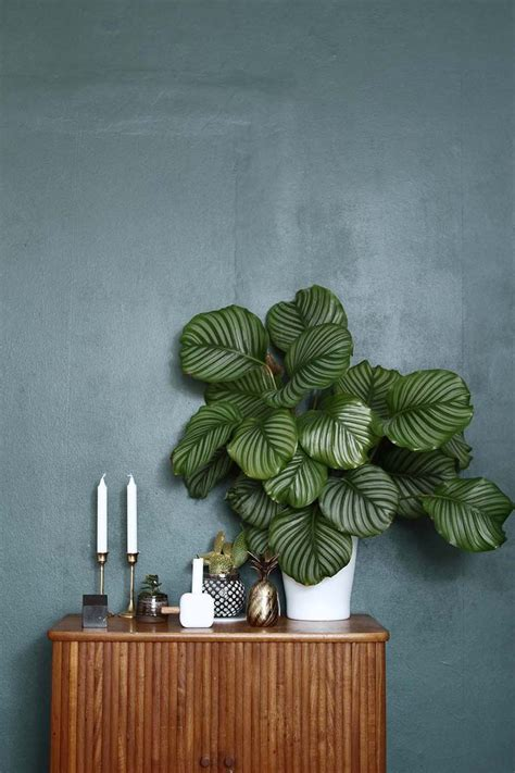 Deco Mur Exterieur 2861 by 1000 Ideas About Planting On