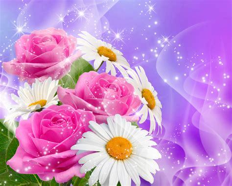 imagenes flores de otoño fondos de pantalla matricaria rosas flores descargar imagenes