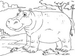 what color are hippos coloriage hippopotame img 23011