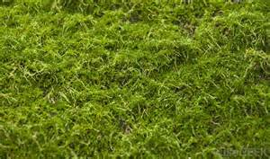 what is the difference between lichen and moss with