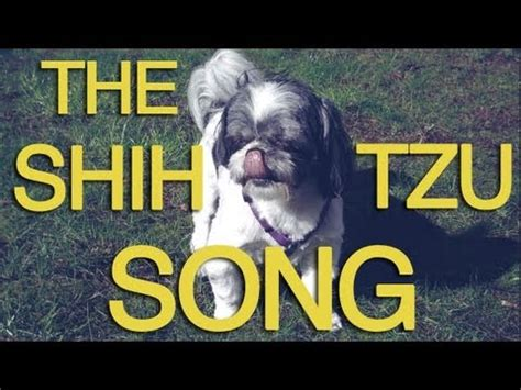shih tzu singing happy birthday singing 西施犬呼呼 狼嚎 超級長叫 shih tzu シーズー犬 doovi