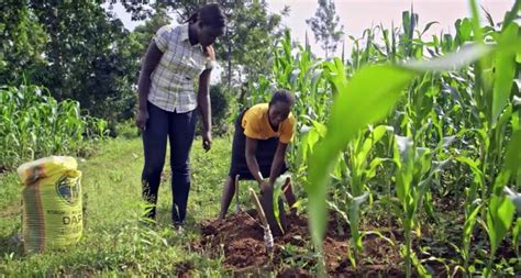 subsistence farming in the inhambane area showing a vegetable patch