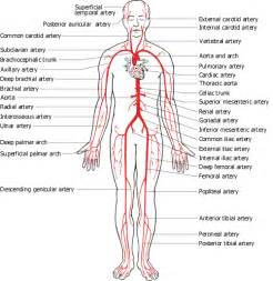 human anatomy chart page 125 of 202 pictures of human