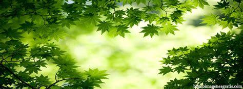 imagenes alegres para portada de facebook hojas verdes portadas para facebook banco de imagenes