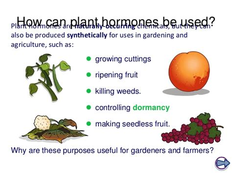 plant hormones worksheet plant hormones