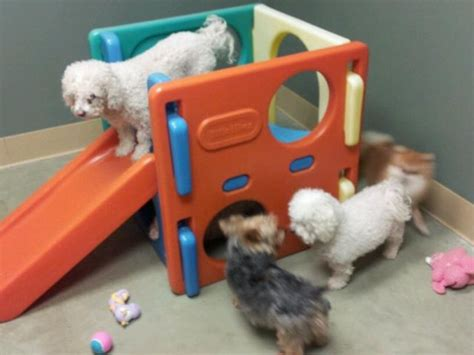puppy daycare dogwood pet resort doggie day care
