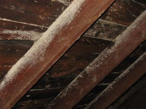 how to identify white mold on wood the basic woodworking